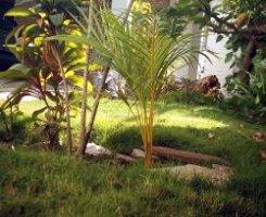 Feng shui en el jardín